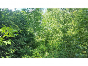 TBD Forest Park Drive, Park Rapids, MN 56470