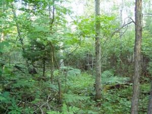 Lot 8 Blk Falling Leaf Trail, Park Rapids, MN 56470