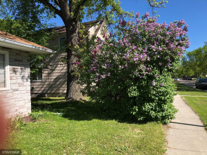 213 Tindolph Avenue N, Thief River Falls, MN 56701