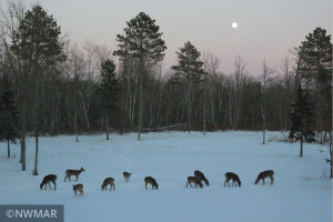 Wonderful views of wildlife with all the deer that come into the yard.