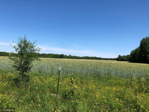 TBD 675th Ave, Roosevelt, MN 56673