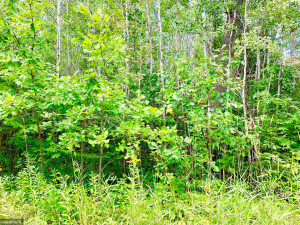 Tract A UT Road 140, Birchdale, MN 56629