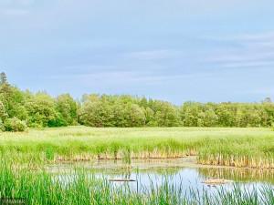 From Across the Creek- Treeline is property