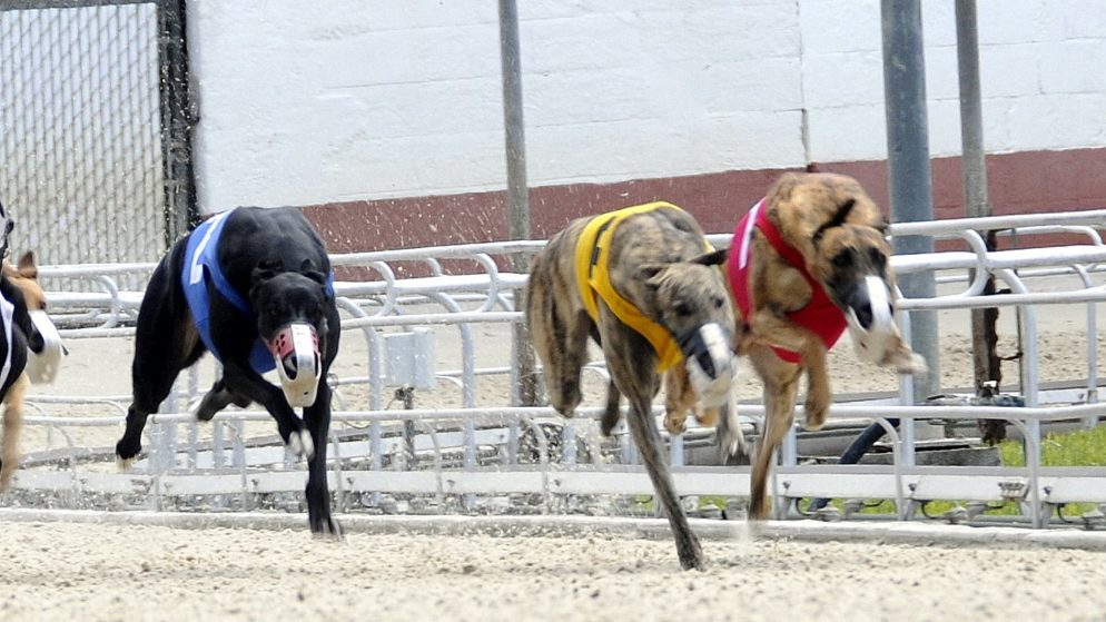 Holiday High Hand at Naples Ft. Myers Greyhound Track