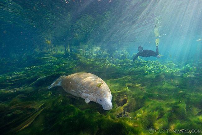 Florida Wildlife Corridor Expedition 01302015