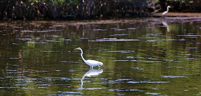Flush with evidence: A study of pollution in the Indian River Lagoon