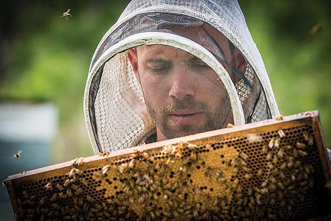East Hill Honey - Pensacola