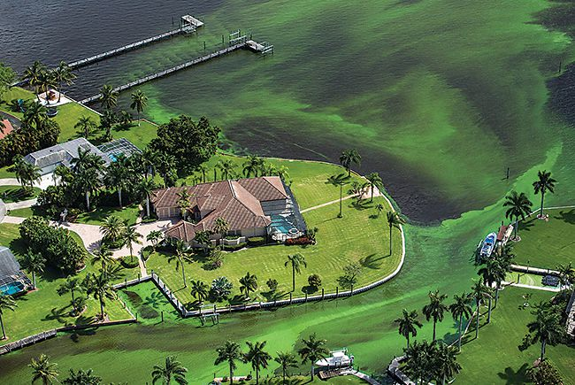 Bloom blame in the Indian River Lagoon
