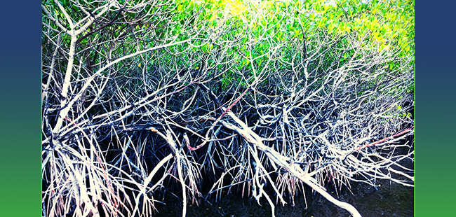 FIU's environmental research expands