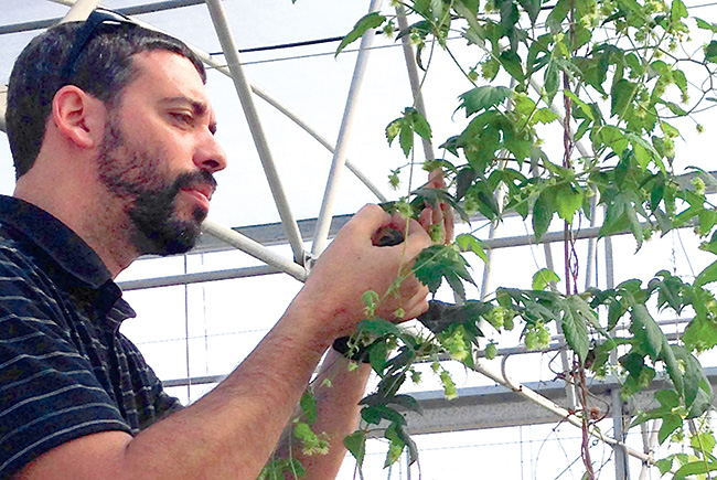Hop to it: UF professor's project leads to Florida-produced hops