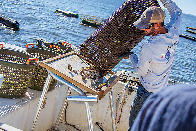 Oyster ambitions: A businessman works to revive Florida's oyster industry