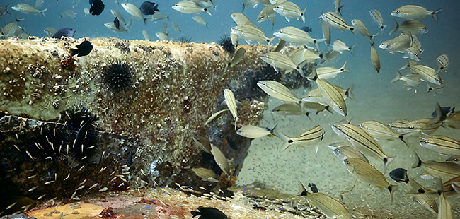 Sunken Treasures: Artificial reefs boost economy and environment
