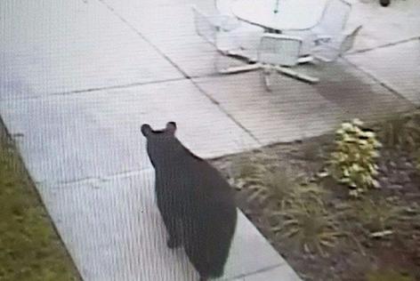 bear on campus
