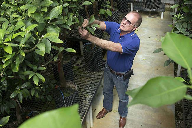 UF is celebrating 100 years of citrus research and education