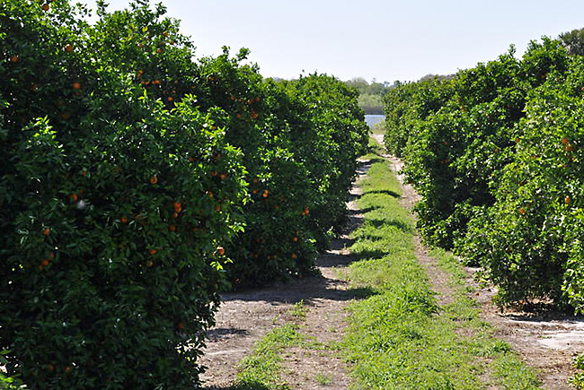 Congressional Budget Deal Gives Millions In Disaster Aid To Florida's Citrus Farmers