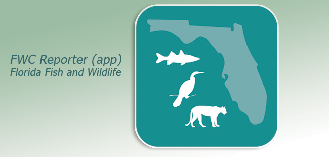 Report fish and wildlife sightings with FWC's new app
