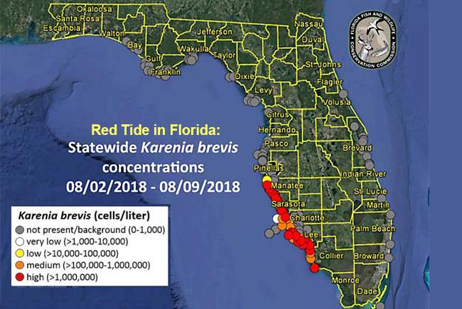 Gov. Scott Issues Emergency Order for Red Tide   Florida Trend