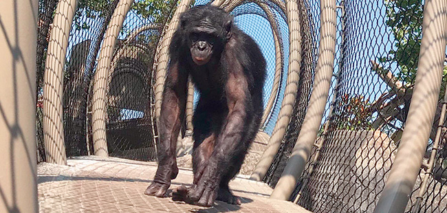 Monkey business: A new exhibit at Jacksonville Zoo