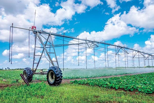 Irrigation Farmland