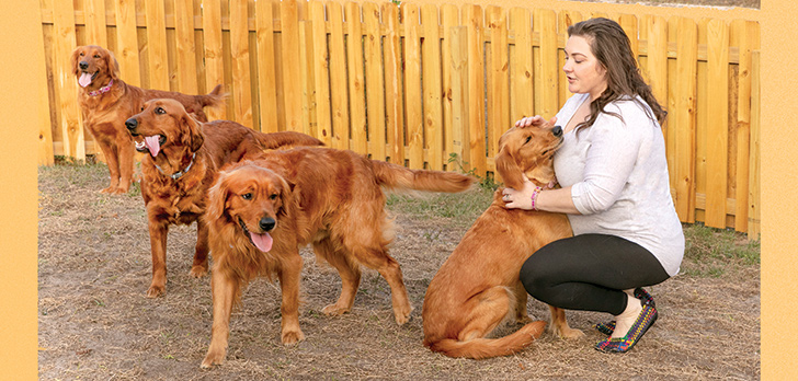 Golden opportunity: Mom-and-pop Florida dog breeders
