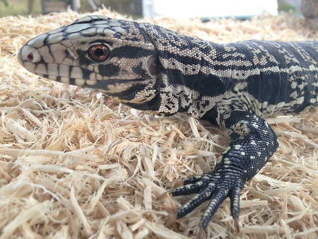 Exotic Pet Amnesty Day set for May 19 in St. Petersburg