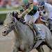 Ocala's horse business growth