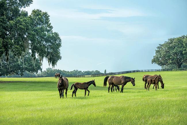 Ocala Horses