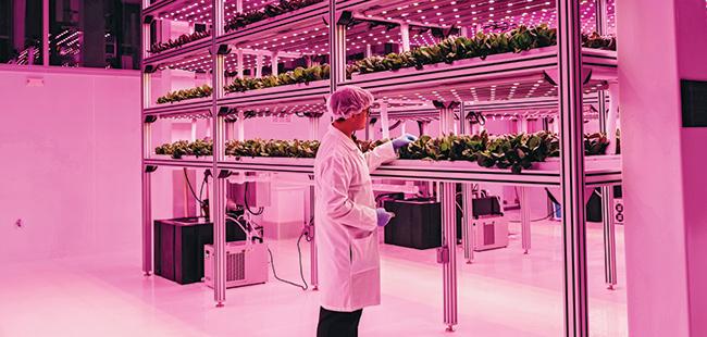 Kalera's hydroponic 'Green' lettuce is a hit