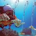 University of Miami researchers rebuilding 125 acres of reef