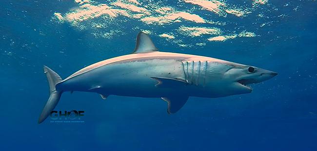 Guy Harvey Ocean Foundation and Shark Allies Support Signing of  Shark Fin Trade Legislation in Florida