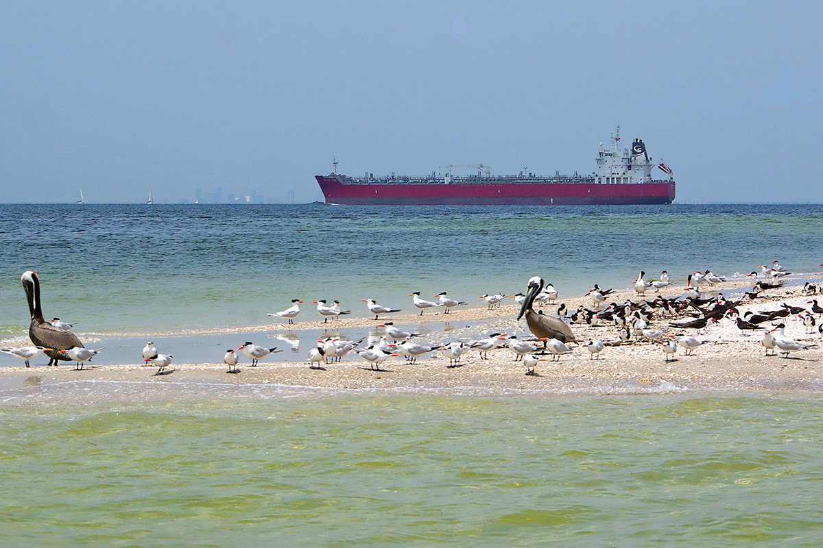 A project at Port Tampa Bay creates a habitat for birds