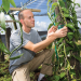 Scientists hope to make vanilla a cash crop in Florida