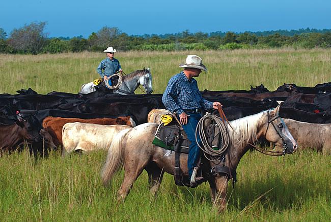 Babcock Ranch Cowboys