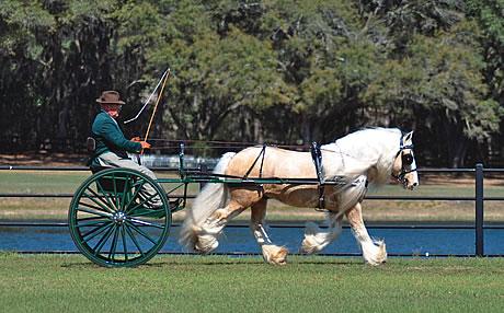 A Horse Drawn Getaway Florida Trend