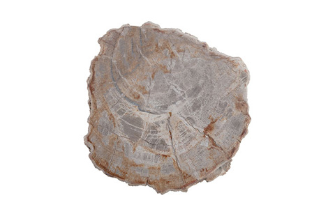Phillips Collection - Petrified Wood Stool - ID70042