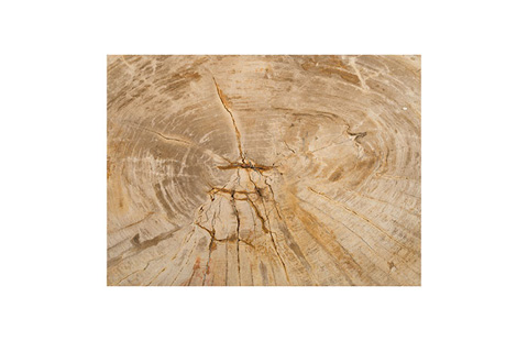 Phillips Collection - Petrified Wood Stool - ID76208