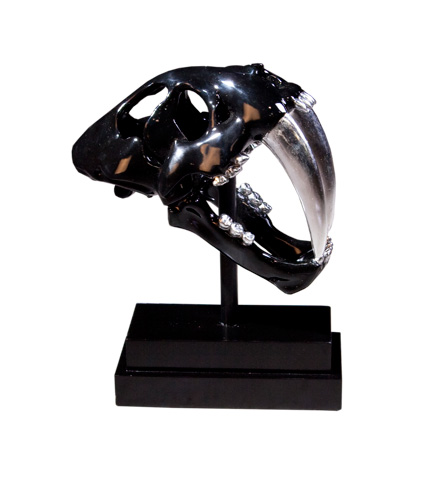 Phillips Collection - Saber Tooth Tiger Skull - PH56705