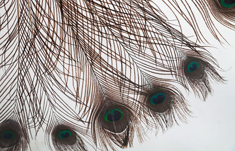 Phillips Collection - Captured Peacock Feather Wall Art - TH73868