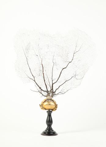 Image of Bastia Fan Coral