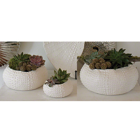 Global Views - Ceramic Urchin Bowl - 3.31154