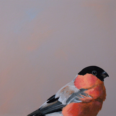 Image of Bullfinch