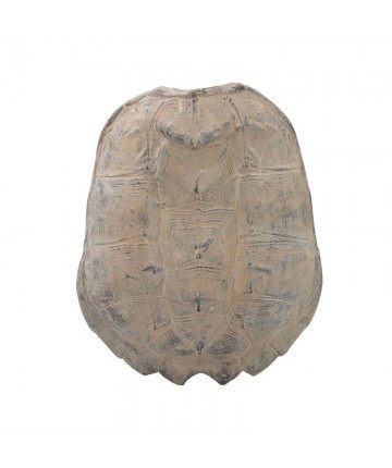 Guildmaster - Cretaceous Spiny Turtle Shell - 2182-019