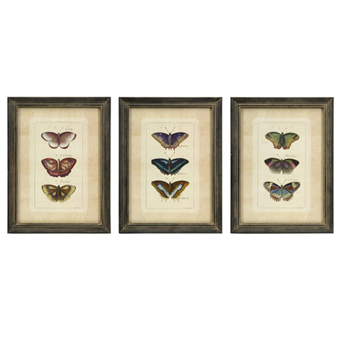 IMAX Worldwide Home - Butterfly Collection Wall Art - Set of 3 - 27304-3