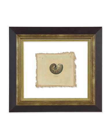 John Richard Collection - Antiqued Sea Life I - GRF-4671A