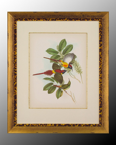 John Richard Collection - Gould Birds of the Tropics I - GRF-5167A