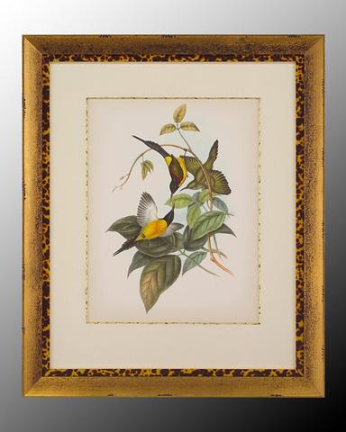 John Richard Collection - Gould Birds of the Tropics II - GRF-5167B