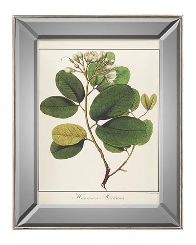 John Richard Collection - Hymenaea Martiana - GRF-5404D