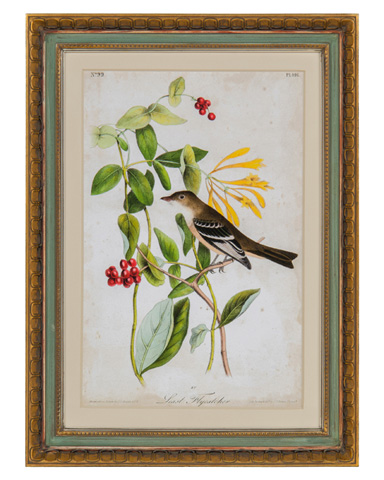 John Richard Collection - Audubon Bird & Botanical II - GRF-5567B