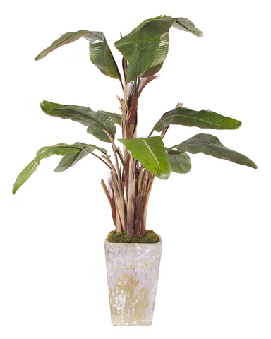 John Richard Collection - Natural Banana Tree - JRB-2139
