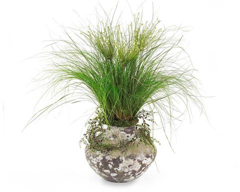 John Richard Collection - Alliums Grass - JRB-2508